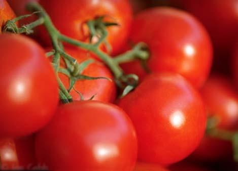 پاورپوینت گوجه فرنگی